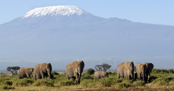African Elephants in Amboseli National Park, Kenya