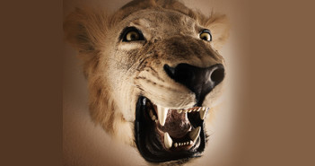Lion head trophy © Tempura/iStock