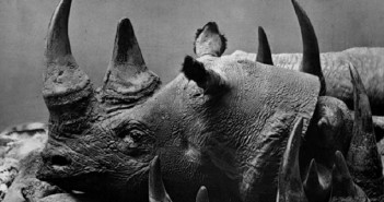Rhino horn, poaching, illegal wildlife trade.