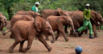 Orphans at the David Sheldrick Wildlife Trust have their football matches. (Image source: www.friendsofafricaaz.org)