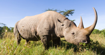 Debates about whether legalising some form of trade in endangered species would help to save those species rage, especially in South Africa, where the 'yes' lobby is particularly strong. New research, however, suggests that we need to re-examine the reasoning that has been used to defend this position.