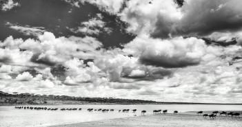Serengeti, Tanzania copyright David Rogers