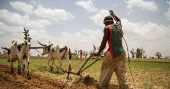 Farmer ploughing field in Mali © fiondavi/iStock