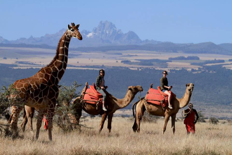 Camel-back game viewing at the Lewa Wildlife Conservancy in Kenya. Lewa and Ol Pejeta, also in Kenya, are so far the only two protected areas in Africa to have been placed on IUCN's Green List.