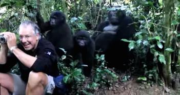 John King's intimate encounter with a Bwindi gorilla family in Uganda.