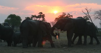 "South Africa's tourism industry is under fire for not taking a stand against ""elephant encounters"". PHOTO: Clarissa Hughes, Conservation Action Trust"