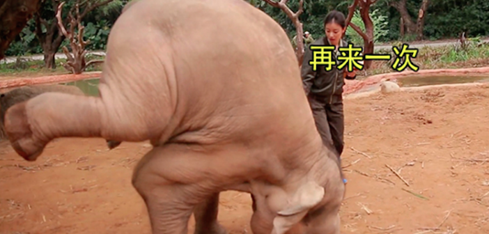 The Chinese characters translate to, 'Do It Again!' © IFAW