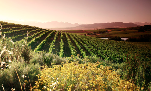 Vondeling Estate, one WWF's BWI champions. The estate has conserved132ha, part of which is Swartland Granite Renosterveld. This is a critically endangered vegetation type of which almost 80% has already been lost due to agriculture. Photograph © Vondeling