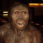Museum model of Australopithecus. Wikimedia Commons