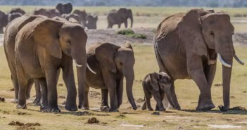 Elephants, Zimbabwe. Photograph Greg Willis / Wikimedia Commons