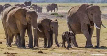 Elephants, Zimbabwe. Photograph Greg Willis / Wikimedia Commons