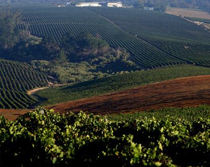 Alto Wine Estate in the Western Cape. Alto is a a member of the WWF Biodiversity & Wine Innitiative © Alto website