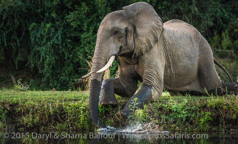 © www.darylbalfour.com / www.wildphotossafaris.com