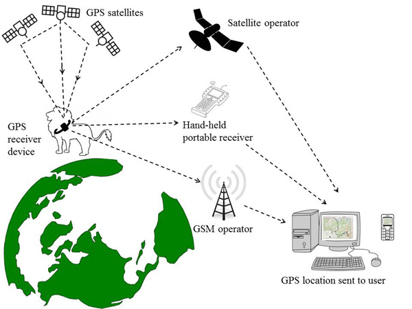Figure 1. Remote data transfers for GPS-based tracking systems use a GSM link, a satellite-based link, or a handheld terminal. (Image compilation: Nadia de Souza)