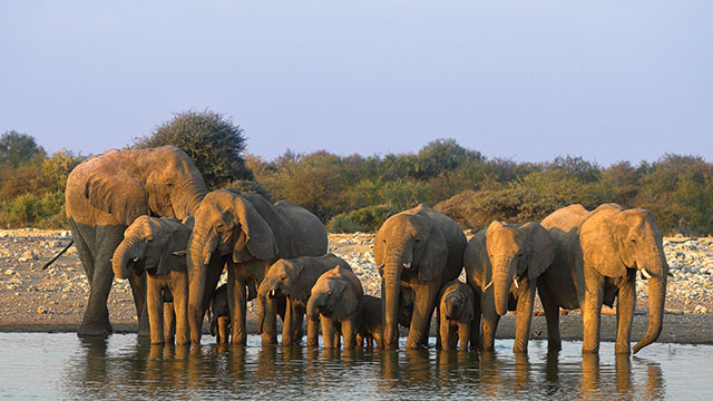 Elephant herd at Mjejane
