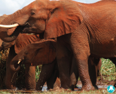 Defeating poachers before they get to the elephants