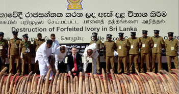 Sri Lankan Ivory crush. Photograph IFAW