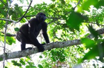 The Dja biosphere reserve is home to western lowland gorillas.