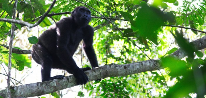 Stéphane Marel Madjaye – eco-guard extraordinaire