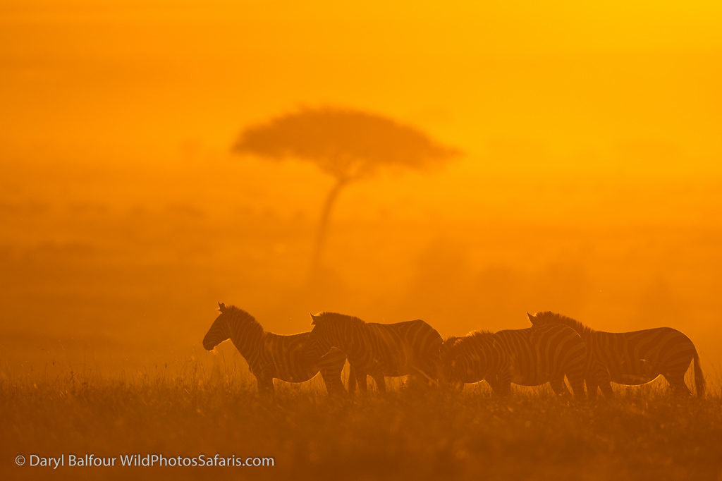 Sunset through the dust from countless hooves.