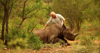 Dr Jacques Flamand after-administering antidote to a sleeping rhino.