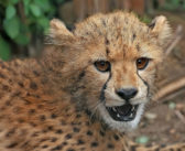 Kenya and IFAW partnership tackles wildlife cybercrime