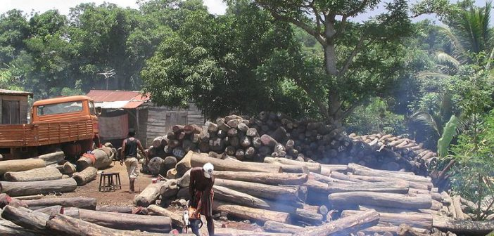 Timber Island: illegal logging out of control in Madagascar
