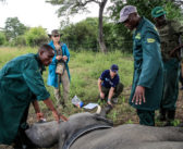 """Creating """"virtual fences"""" to protect famers and the crops from elephants"""