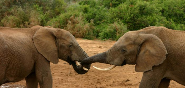 African rangers call on Hong Kong to halt ivory trade