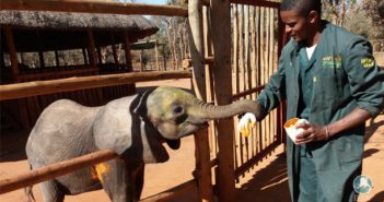 Good teamwork saves baby elephant