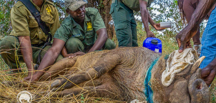 Anti poaching charities doing good work: Victoria Falls Anti-Poaching Unit