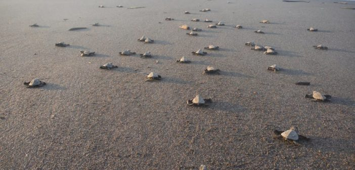 Ancient turtle beaches discovered along South Africa's southern Cape coast