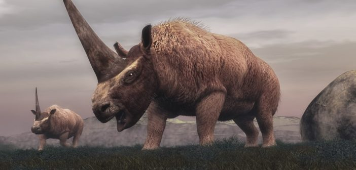 55 million years of rhinos – sometimes weird, but always wonderful